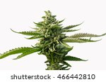 isolated marijuana cannabis... | Shutterstock . vector #466442810