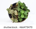 Small photo of Small plant that is half dead and half alive on white background. Inspiration for concepts idea.