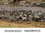 great migration in masai mara ...   Shutterstock . vector #466484414