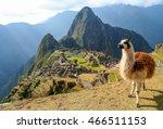 llama in front of ancient inca... | Shutterstock . vector #466511153