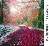 Autumn In Transcarpathia...