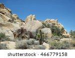 Boulders And Cactus In Joshua...