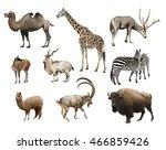 a collage of animals mammals...   Shutterstock . vector #466859426