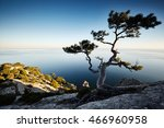 tree and sea at sunset. crimea... | Shutterstock . vector #466960958