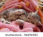 Stock photo kitty sleeping 46696582