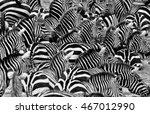 Zebras In The Big Herd During...