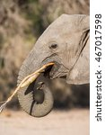 Small photo of Side profile of African elephant in African wilderness during daytime