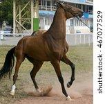 Closeup Of Horse Refusing To G...