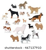 Dogs Breed Set Isolated On...