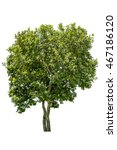 tree isolated on white... | Shutterstock . vector #467186120