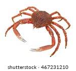A European Spider Crab In Whit...