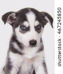 husky welpe v | Shutterstock . vector #467245850