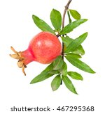 Young Pomegranate Fruit On A...