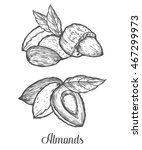 almond nut seed vector.... | Shutterstock .eps vector #467299973