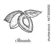 almond nut seed vector.... | Shutterstock .eps vector #467300000