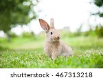 bunny rabbit on the grass.... | Shutterstock . vector #467313218