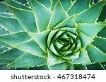 Detail Of Wild Aloe Vera From...