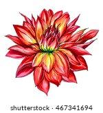 red passion hawaiian dahlia... | Shutterstock . vector #467341694