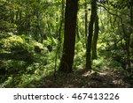 green forest | Shutterstock . vector #467413226