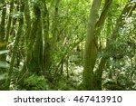 green forest | Shutterstock . vector #467413910