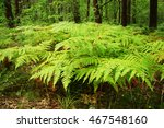 Ferns Carpet  The Forest Floor