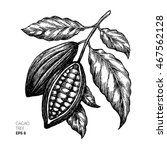 Cocoa Beans Illustration....