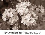 Geranium  Flower Background...