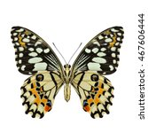 Stock photo lime butterfly or lemon butterfly lower wing part in natural color profile isolated on white 467606444