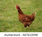 hen on garden  hen walking in... | Shutterstock . vector #467612048