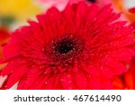 daisy macro with water droplets ... | Shutterstock . vector #467614490