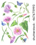 bindweed set.  set of floral... | Shutterstock . vector #467675993