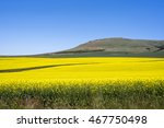 golden fields of idaho | Shutterstock . vector #467750498