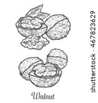 walnut nut seed vector.... | Shutterstock .eps vector #467823629