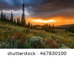 wildflower sunset in the rocky... | Shutterstock . vector #467830100