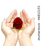 My rose for You - stock photo