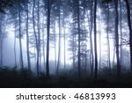 Sunset In A Forest With Fog