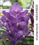 Small photo of colorful vanda orchid