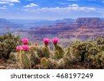 Prickly Pear Cactus Blooms...