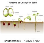 germination is the process by... | Shutterstock .eps vector #468214700