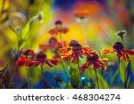 Gaillardia Firewheel Flowers...