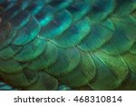 close up peacock feathers | Shutterstock . vector #468310814