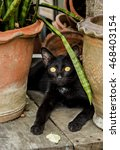 Black Cat Inside Potted Plants...