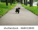 Homeless Black And White Cat O...