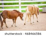 dwarf horses are beautiful... | Shutterstock . vector #468466586