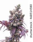 Purple  Frosty Cannabis Flower