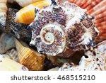 Close Up Of Variety Of Sea...