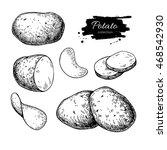 Potato Drawing Set. Vector...