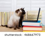 Stock photo siamese kitten with blue eyes sitting next to black kitten with green eyes looking intently at 468667973