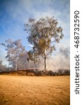 Small photo of Bush fire in the Australian Bush. Gum tree and scrub on fire as part of a controlled burn off to reduce flammable fuel in the bush fire season drier months
