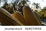 maize | Shutterstock . vector #469074944